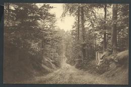 +++ CPA - MONT DE L'ENCLUS - KLUISBERG - Chemin Sous Bois   // - Kluisbergen