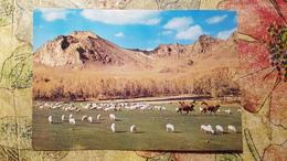 Mongolia. Camel And Sheep - 1970s -    - Old Postcard - Mongolie