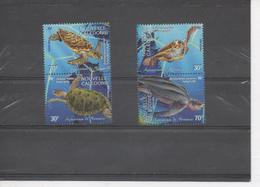 Nelle CALEDONIE- Faune -Tortues Marines : Carette Caretta, Chelonia Mydas, Etc - Aquarium De Nouméa - - New Caledonia