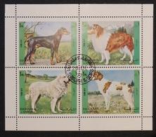 Sharja Dobermann Lassie Hirtenhund - Chiens