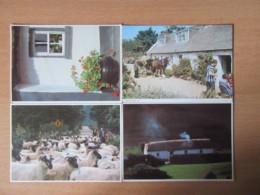 Irlande + Jersey - Lot De 11 Cartes Postales Modernes (CPM) Dont Animées, Non-circulées - Irlande