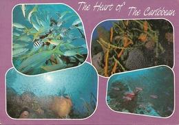 The Heart Of The Caribbean, Pesci Del Mar Dei Caraibi, - Pesci E Crostacei