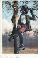 A Treed Coon - Black Boy On A Tree - Autres