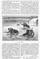 LES ELEPHANTS PLONGEURS Au NOUVEAU-CIRQUE  ( Arènes Nautiques )  à PARIS   1899 - Théâtre