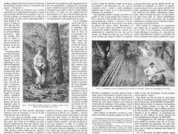 """LES ARBRES à CAOUTCHOUC De  """" L'AMERIQUE """"   1899 - Autres"""