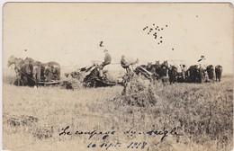 CANADA MANITOBA HAYWOOD  Carte Photographique 10 Septembre 1918 Le Coupage Du Seigle - Manitoba