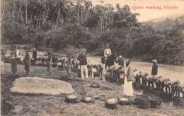 Ceylon - Ethnic H / 82 - Cocoa Washing - Sri Lanka (Ceylon)