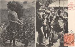 Ceylon - Ethnic H / 97 - Tea Plucking - Weighing Green Leaf Tea - Belle Oblitération - Sri Lanka (Ceylon)