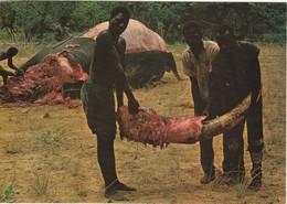 POSTCARD AFRICA ANGOLA - O DESMANCHAR DO ELEFANTE - ELEPHANT TEETH - Angola
