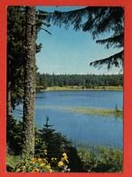 CP49 63 LE MONT DORE  19  Année 1965 Le Lac Servière - Le Mont Dore