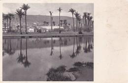MOUNT CARAMEL, SEEN FROM HAIFA. PHOTO J. BENOR-KALTER. S ADLER. CIRCA 1930s-RARE- BLEUP - Israël