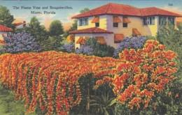 Florida Miami Beautiful Home With Flame Vine And Bougainvillea 1954 - Miami