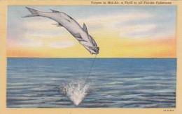 Florida Tarpon Fishing 1946 Curteich - United States