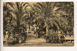 PALERMO ORTO BOTANICO VIALE DELLE PALME - Palermo