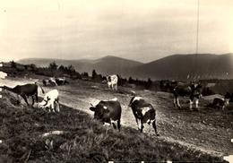 [63] Puy-de-Dôme > Autres Communes  SAINT PIERRE  LA  BOURLHONNE :/ LOT  501 - Francia