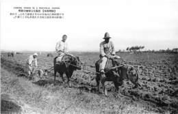 Corée - Korea  / 36 - Farming Viewed In A Rice Field - Chosen - Corée Du Sud