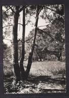 CPSM 17 - ILE D'OLERON - SAINT-TROJAN - Sous-Bois Dans La Forêt - TB PLAN Nature - Ile D'Oléron