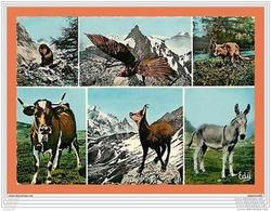 A286/253 Les Hotes De Nos Montagnes - Marmotte - Aigle - Renard - Animaux & Faune