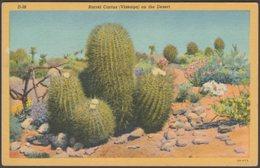 Barrel Cactus (Visnaga) On The Desert, Arizona, 1936 - Lollesgard Postcard - United States