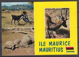 MAURITIUS  ,  OLD  POSTCARD - Maurice