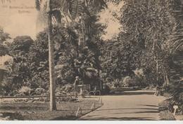 C.P.A. - SYDNEY -BOTANICAL GARDEN - 1521 - - Sydney