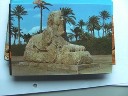 Egypte Egypt Giza Spinx Of Sakkara Nice View - Sphynx