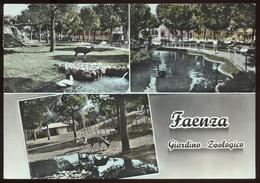 FAENZA, Giardino Zoologico - Viaggiata - Negativo Bianco E Nero Colorato A Mano - Faenza
