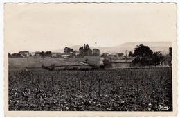 PERONNE (S.-et-L.) - LE CARUGE - Vedi Retro - Formato Piccolo - Other Municipalities