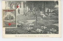 CROIX ROUGE - RED CROSS - CROIX ROUGE FRANÇAISE - Maison De Convalescence D' ECKMÜHL - ORAN : Lecture Au Jardin - Croix-Rouge