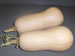 20 Graines De COURGES BUTTERNUT( BIO) - 2. Seeds