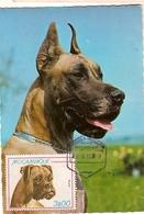 Mozambique & Maxi Card, Breed Dog, Boxer 1980 (965) - Mozambique