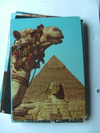 Egypte Egypt Giza Gizeh Camel Head And Pyramid And Sphinx - Gizeh