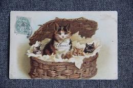 Chat Et Chatons Dans Un Panier D'osier - Chats
