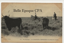 30 - En CAMARGUE - Le LISANTEN Et ESPERANZA De La Manade Combet ++++ Cabanis E. Nîmes, #122 +++ TAUREAUX / Gardians - France