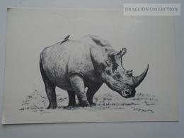 D162400 BOPHUTHATSWANA - South Africa -  Pilansberg Nature Reserve - Rhino Rhinoceros - Rhinocéros