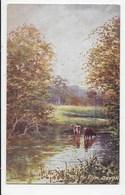 On The Plym, Devon - Jenkins  -  Tuck Oilette 7841 - England