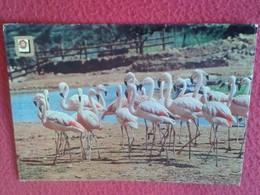SPAIN POSTAL POSTCARD CARTE POSTALE TARRAGONA RÍO LEON SAFARI PARK ALBIÑANA FLAMENCOS. FLAMINGO FLAMINGOS CATALONIA - Animales