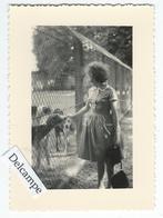 CHEVERNY (41)  - La Meute Des Chiens De Chasse à Courre Du Château En 1962 - Photo Originale 10.6 X 7.8 Cm - Lieux