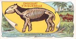 PIE-RO-18-7520 : EDITION CHOCOLAT D'AIGUEBELLE. LES FOSSILES. PALOEOTHERIUM MAGNUM. VITRY-SUR-SEINE. VAL DE MARNE. - Aiguebelle