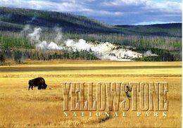 YELLOWSTONE NATIONAL PARK CARTOLINA  1370 - Yellowstone