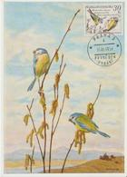 Tchécoslovaquie Carte Maximum Oiseaux 1959 Mésanges 1047 - Tchécoslovaquie