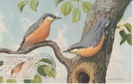 Tchécoslovaquie Carte Maximum Oiseaux 1959 Sitelle 1048 - Tchécoslovaquie