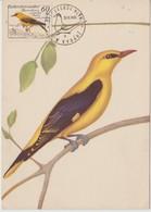 Tchécoslovaquie Carte Maximum Oiseaux 1959 Loriot 1049 - Tchécoslovaquie