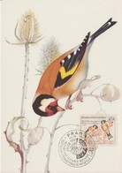 Tchécoslovaquie Carte Maximum Oiseaux 1959 Chardonnerets 1050 - Tchécoslovaquie
