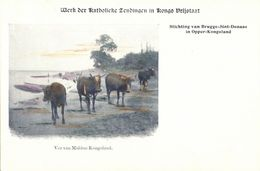 Congo Free State, Cattle Of Kongoland (1899) Mission Postcard - Belgian Congo - Other