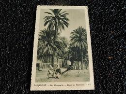 Laghouat, Les Remparts, étude De Palmiers (J6) - Laghouat