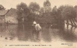 80  Saint Valéry Sur Somme  La Mare Aux Canards - Saint Valery Sur Somme