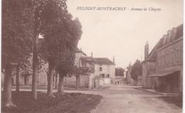 21 Côte D'Or - PULIGNY-MONTRACHET - Avenue De Chagny - France