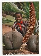 Male And Female Coco De Mer , Neuve - Seychelles
