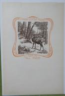 Ex-libris Illustré Belgique XXème - Sigle ABCDE (Association Belge Des Collectionneurs D'Ex-Libris)-LUTTER Cerf En Forêt - Ex-libris